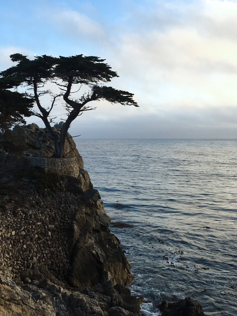 2017-8-30-Lone-Cypress