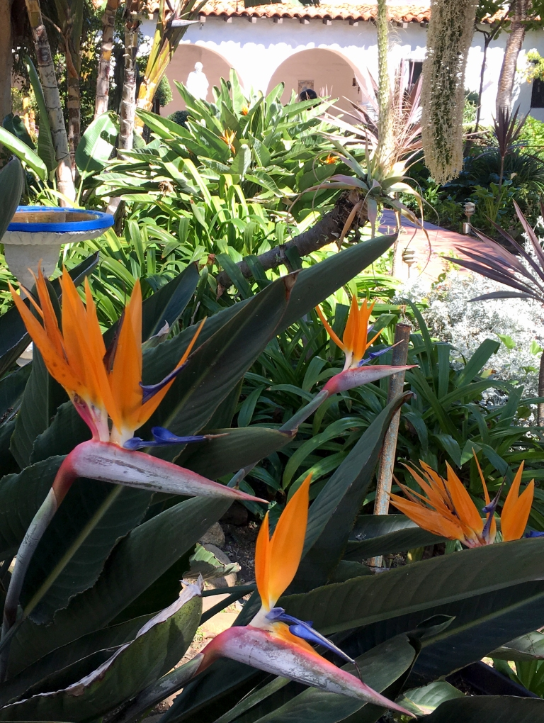 Mission-San-Diego-MeditationGarden | Davina at Home and Abroad